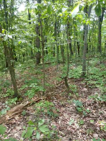 0 Forest Drive Ext, Luray, VA 22835 (MLS #604850) :: Real Estate III