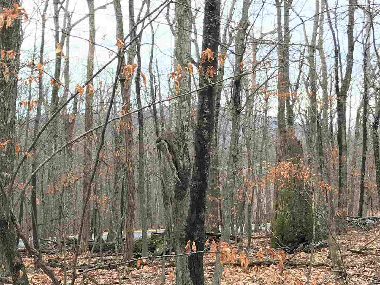318 Timber Camp Dr - Photo 1