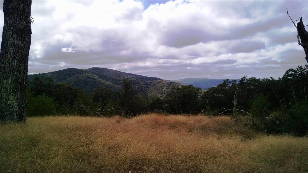 TBD Jack Mountain Rd - Photo 1