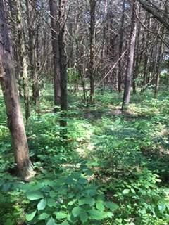 A34 Cedar Meadow Dr, Nellysford, VA 22958 (MLS #605681) :: KK Homes