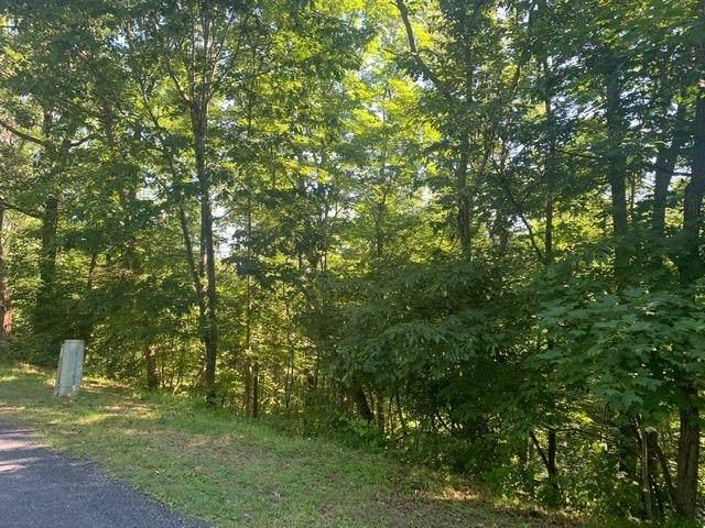 TBD Richmon Rd, Basye, VA 22810 (MLS #619724) :: Jamie White Real Estate