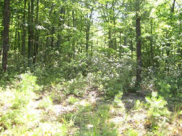 Lot 47 Birds Nest Rd, HINTON, VA 22831 (MLS #606850) :: Kline & Co. Real Estate