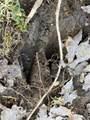 Lot 7 Dogwood Trail - Photo 5