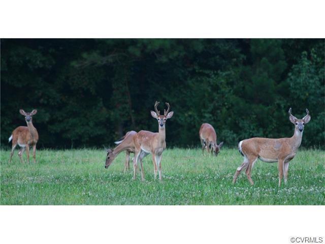 6995 Laurel Springs, Prince George, VA 23875 (#1823381) :: Resh Realty Group