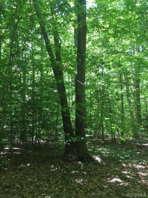 Lot 6 Avalon Woods Road, Hanover, VA 23192 (MLS #1904922) :: The RVA Group Realty