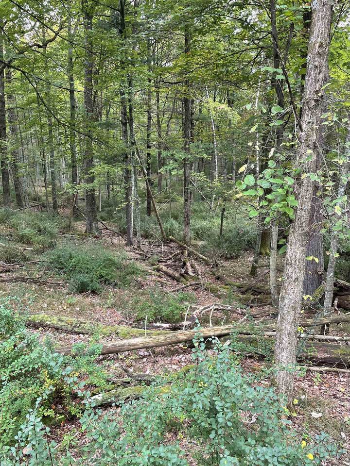 10.265 Acres-Lot 8 o Townline Road - Photo 1