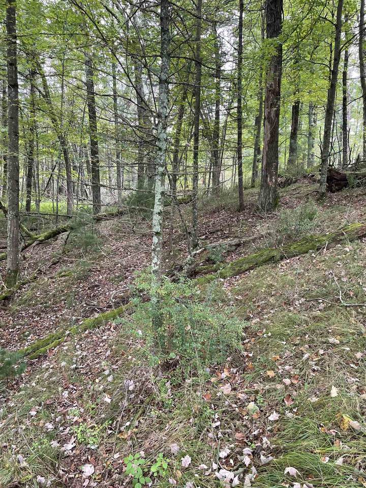 8.95 Acres-Lot 11 of Townline Road - Photo 1