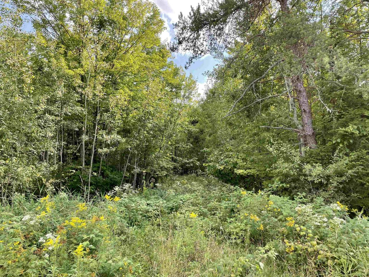 33.45 Acres County Road Ff - Photo 1