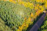 39.5 acres Land Art Road - Photo 1