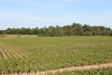 41 Acres County Road Q - Photo 7
