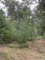 10.239 Acres-Lot 6 o Townline Road - Photo 1