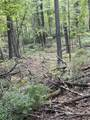 10.24 Acres-Lot 7 of Townline Road - Photo 4