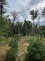10.265 Acres-Lot 8 o Townline Road - Photo 2