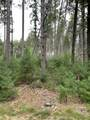 4.282 Acres-Lot 9 of Townline Road - Photo 4