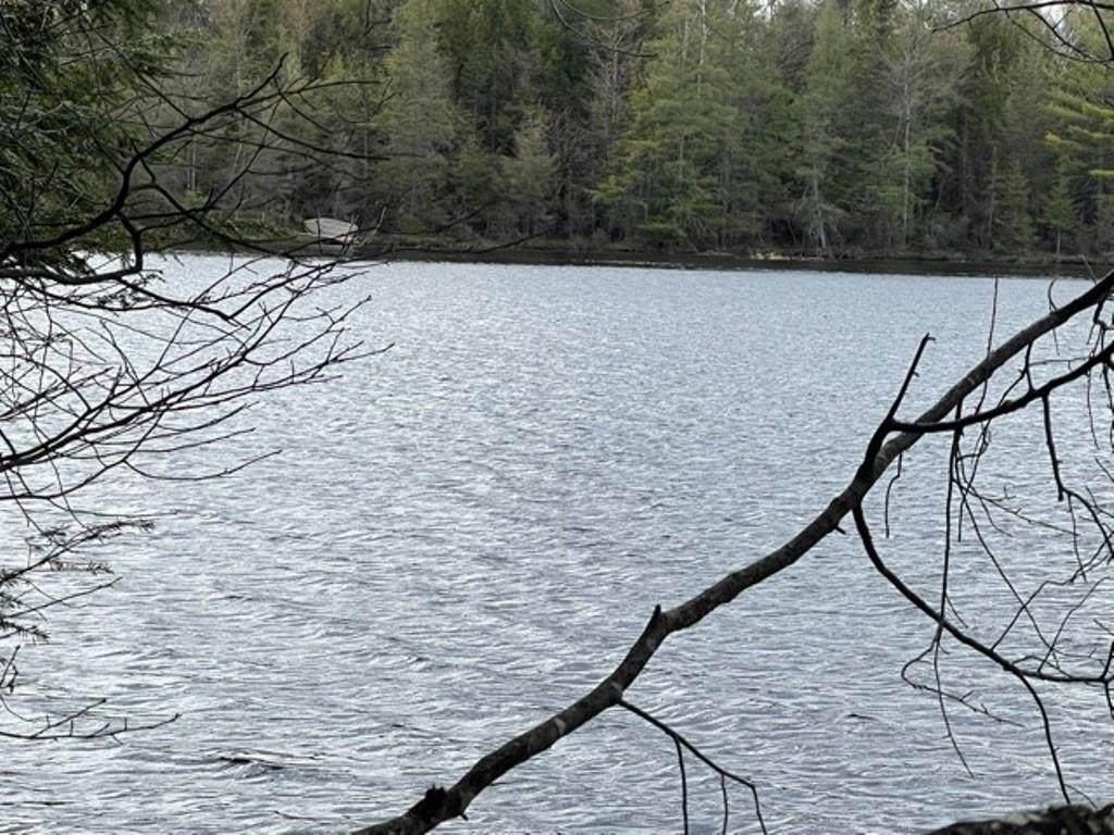 1 Acre W Lot 4 Lake 19 Road - Photo 1