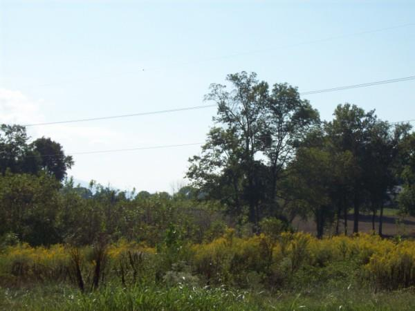 36,37 Creekside Way, CHATSWORTH, GA 30705 (MLS #114287) :: The Mark Hite Team