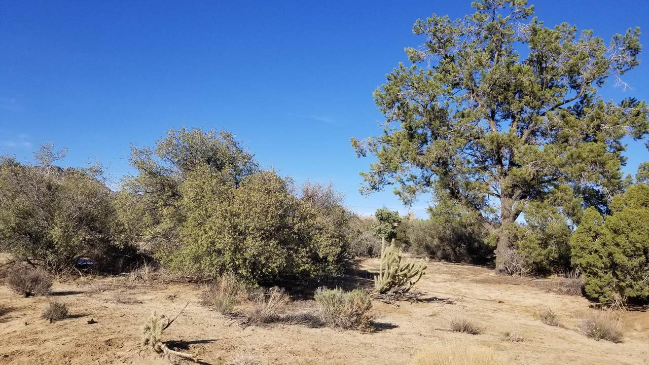 0- Palm Canyon Drive - Photo 1