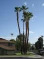 72599 Edgehill Drive - Photo 25