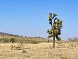 4058 Desert Moon Road - Photo 25