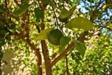 42 Oak Tree Drive - Photo 10