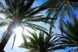 44588 Heritage Palms Drive - Photo 10