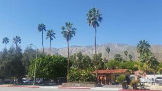 1305 N Indian Canyon Drive, Palm Springs, CA 92262 (MLS #217009072) :: Brad Schmett Real Estate Group