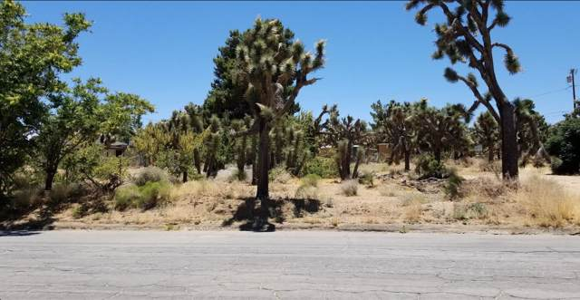 55561 Santa Fe Trail, Yucca Valley, CA 92284 (MLS #219034049) :: Hacienda Agency Inc