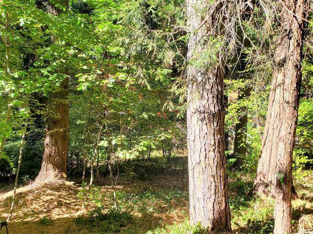0 Community Drive, Lake Arrowhead, CA 92352 (MLS #219052206) :: Mark Wise | Bennion Deville Homes