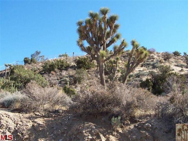 0 Twentynine Palms Outer Highway, Yucca Valley, CA 92284 (MLS #14733939PS) :: The John Jay Group - Bennion Deville Homes