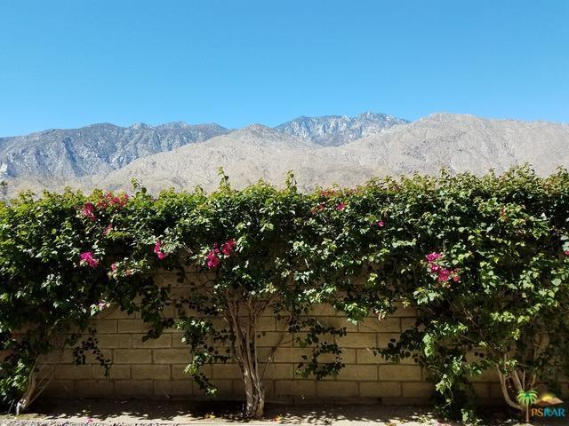 1655 E Palm Canyon Drive #317, Palm Springs, CA 92264 (MLS #17278676PS) :: Brad Schmett Real Estate Group