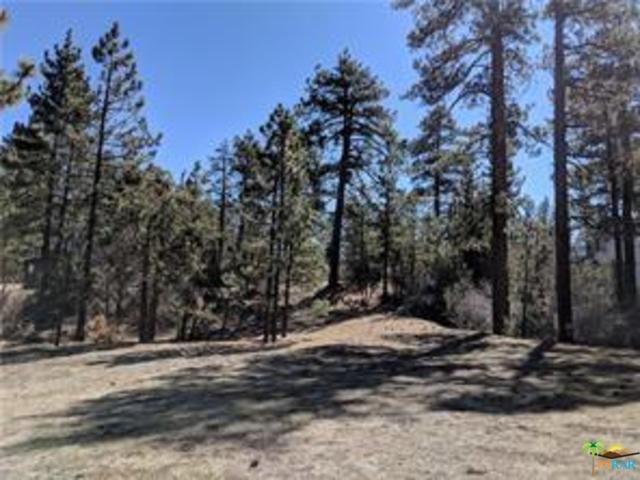 557 Division Drive, Big Bear, CA 92314 (MLS #19428520PS) :: Hacienda Group Inc