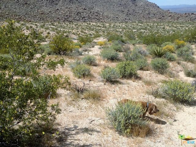 0 Jackass Trail, 29 Palms, CA 92252 (MLS #17219670PS) :: Brad Schmett Real Estate Group