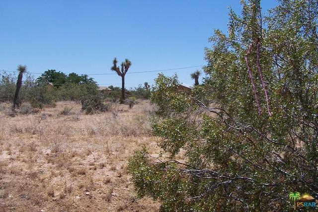 0 Campanula Street, Yucca Valley, CA 92284 (MLS #17237126PS) :: Hacienda Group Inc
