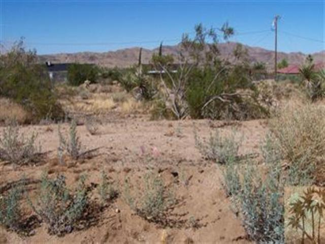 0 Adobe Drive, Joshua Tree, CA 92252 (MLS #41408096PS) :: Brad Schmett Real Estate Group