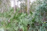 0 Old Deland Road - Photo 5
