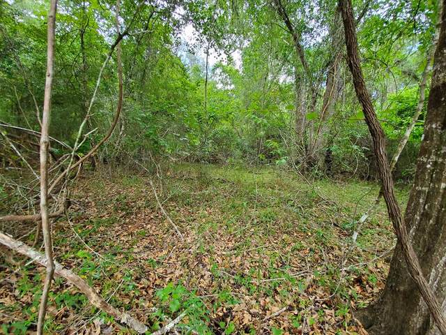 Lot 15 82nd Terrace NW, Bell, FL 32619 (MLS #780210) :: Compass Realty of North Florida