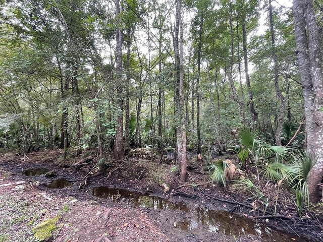 2339 Ancient Oaks Dr NE, Steinhatchee, FL 32359 (MLS #782857) :: Compass Realty of North Florida