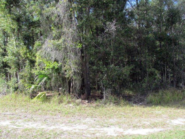 69th Terr SE, Trenton, FL 32693 (MLS #764017) :: Pristine Properties