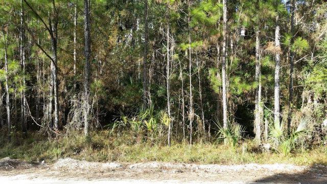 123rd Ave SW, Steinhatchee, FL 32359 (MLS #771669) :: Pristine Properties