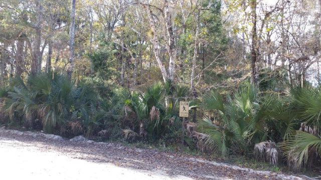 203 126th Ave SW, Steinhatchee, FL 32359 (MLS #771670) :: Pristine Properties