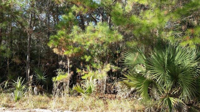 123rd Ave SW, Steinhatchee, FL 32359 (MLS #771672) :: Pristine Properties
