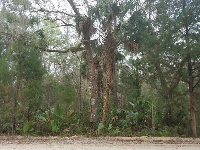 1416 Palm Street NE, Steinhatchee, FL 32359 (MLS #773129) :: Pristine Properties