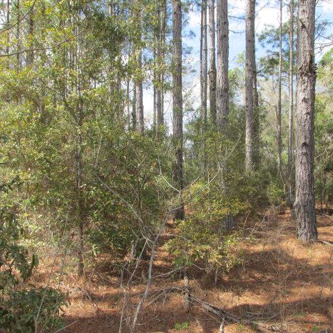 74th Terr NW, Chiefland, FL 32626 (MLS #773723) :: Pristine Properties