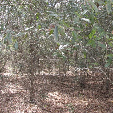 74th Terr NW, Chiefland, FL 32626 (MLS #773725) :: Pristine Properties
