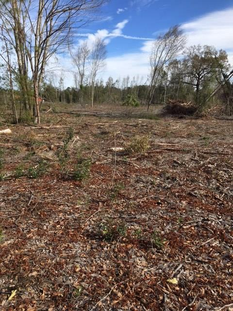 10 acres 40 Ave. NW, Chiefland, FL 32626 (MLS #775085) :: Pristine Properties
