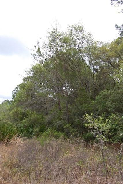 Lot 41 White Oak Drive NE, Steinhatchee, FL 32359 (MLS #775110) :: Pristine Properties