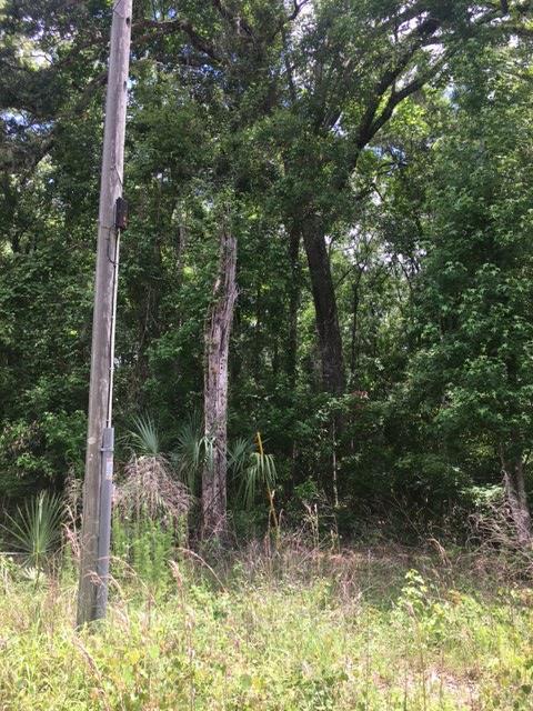550th St NE, Old Town, FL 32680 (MLS #775892) :: Pristine Properties