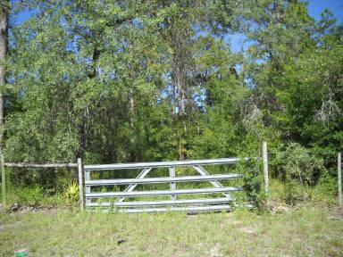 Lot 43 808th Street NE, Old Town, FL 32680 (MLS #776877) :: Pristine Properties