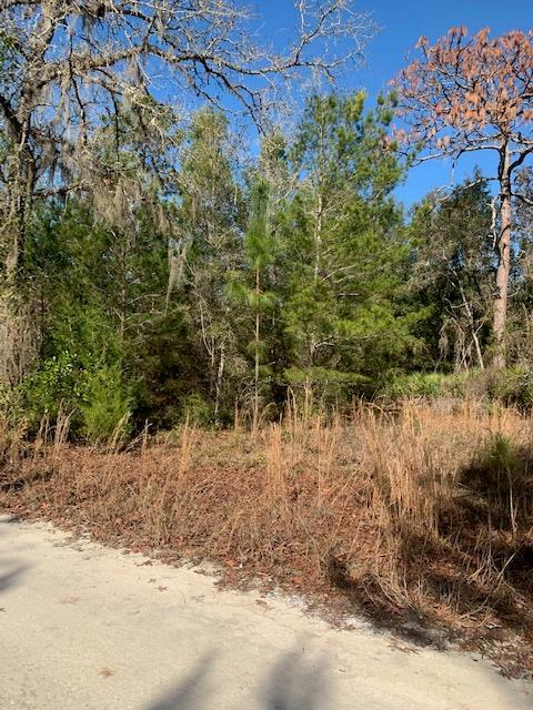 Lot 7 464th Ave NE, Old Town, FL 32680 (MLS #777155) :: Pristine Properties