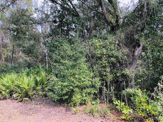 85 Avenue NW, Chiefland, FL 32626 (MLS #777325) :: Pristine Properties